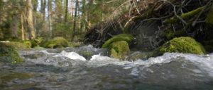 Meta-ecosystem ecology