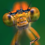 Wie es den Schweizer Insekten geht